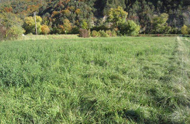 Terrain agricole – T1527